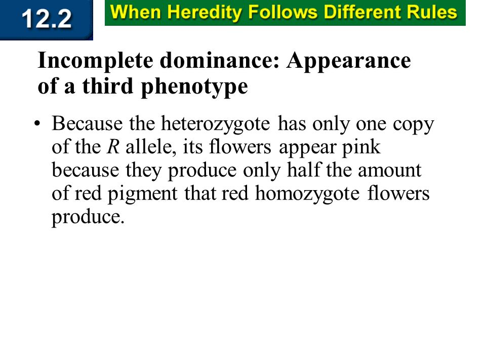Section 12.2 Summary – pages 315 - 322 Incomplete dominance: Appearance of a third phenotype Because the heterozygote has only one copy of the R allel