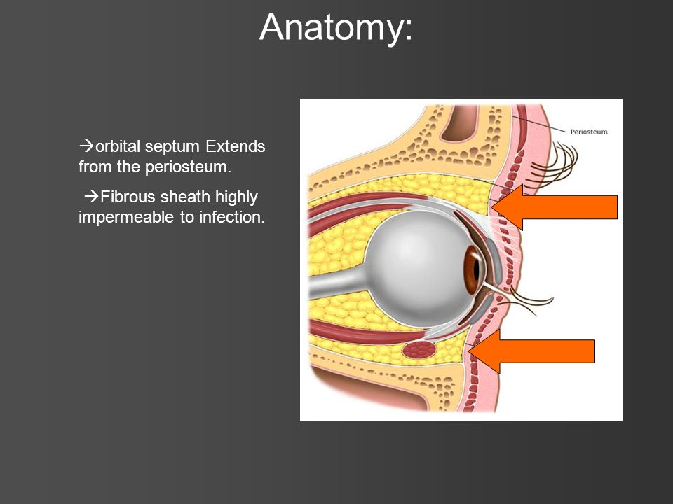Anatomy: orbital septum Extends from the periosteum. Fibrous sheath highly impermeable to infection.
