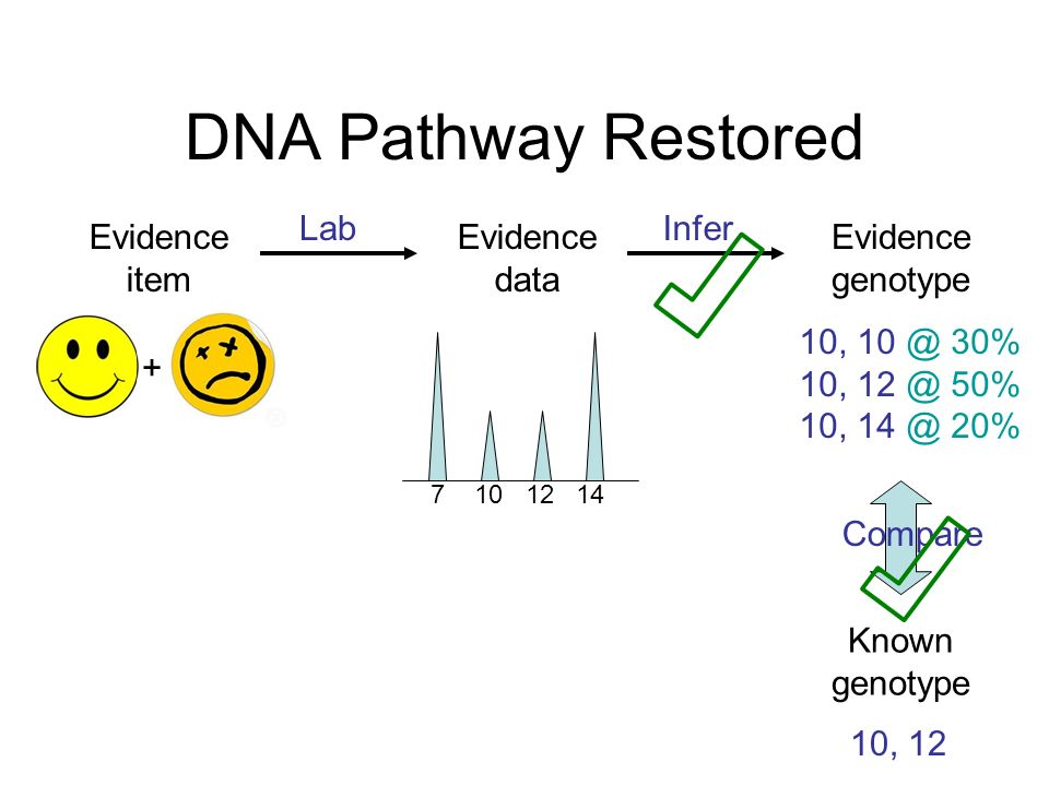 DNA Pathway Restored LabInfer Evidence item Evidence data 7 10 12 14 + Known genotype 10, 10 @ 30% 10, 12 @ 50% 10, 14 @ 20% 10, 12 Compare Evidence g