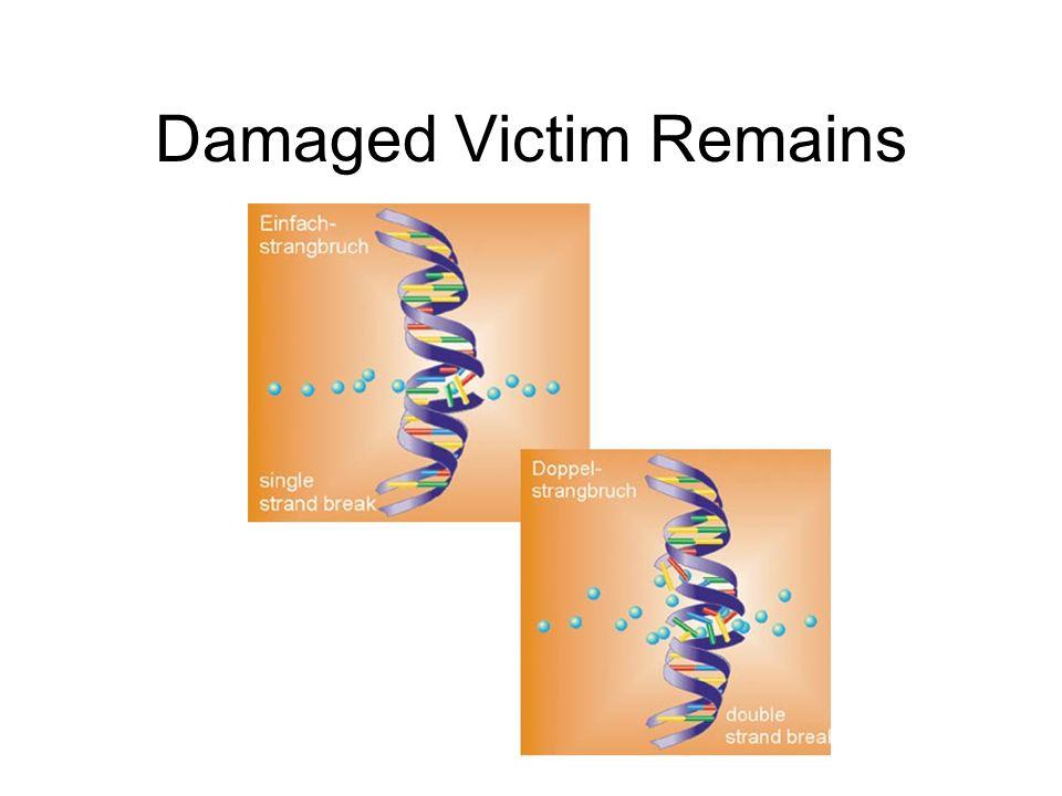 Damaged Victim Remains