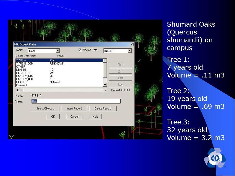 Shumard Oaks (Quercus shumardii) on campus Tree 1: 7 years old Volume =.11 m3 Tree 2: 19 years old Volume =.69 m3 Tree 3: 32 years old Volume = 3.2 m3