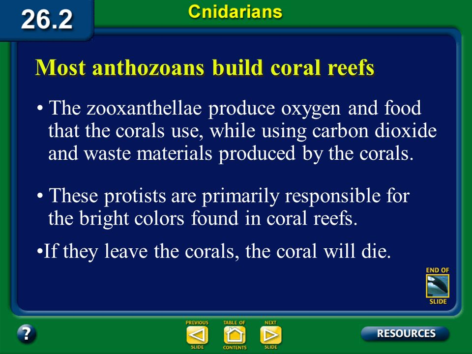 Section 26.2 Summary – pages 698-705 Although corals are often found in relatively shallow, nutrient-poor waters, they thrive because of their symbiot