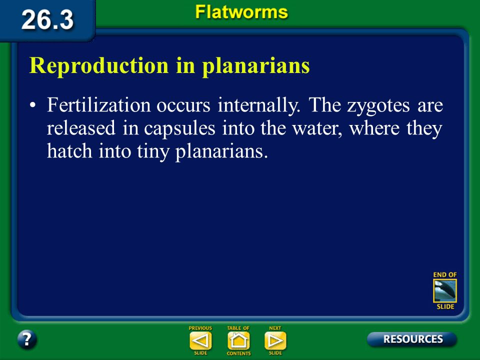 Section 26.3 Summary– pages 706-710 Like many of the organisms studied in this chapter, most flatworms including planarians, are hermaphrodites. Repro