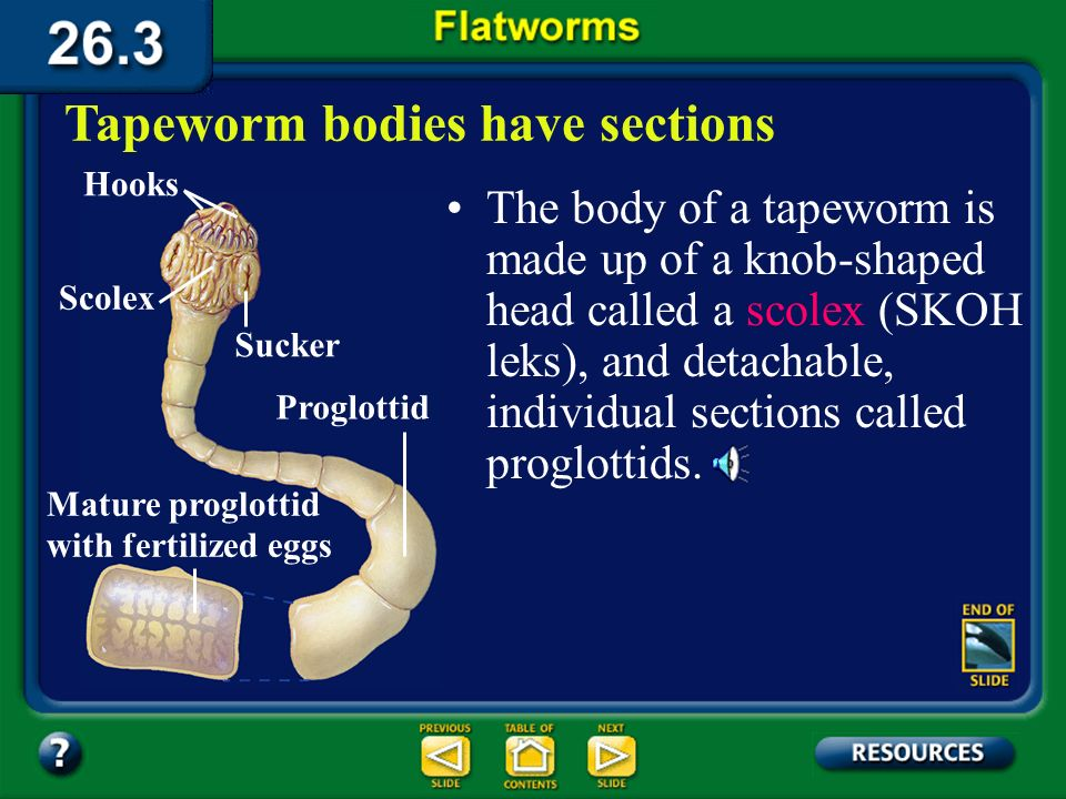 Section 26.3 Summary– pages 706-710 They do not need to move to seek out or find food. Feeding and digestion in parasitic flatworms Parasitic flatworm