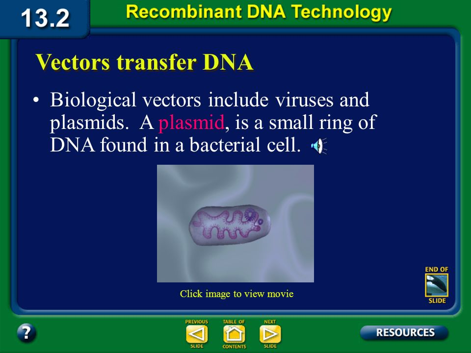 Section 13.2 Summary – pages 341 - 348 Vectors transfer DNA A vector is the means by which DNA from another species can be carried into the host cell.