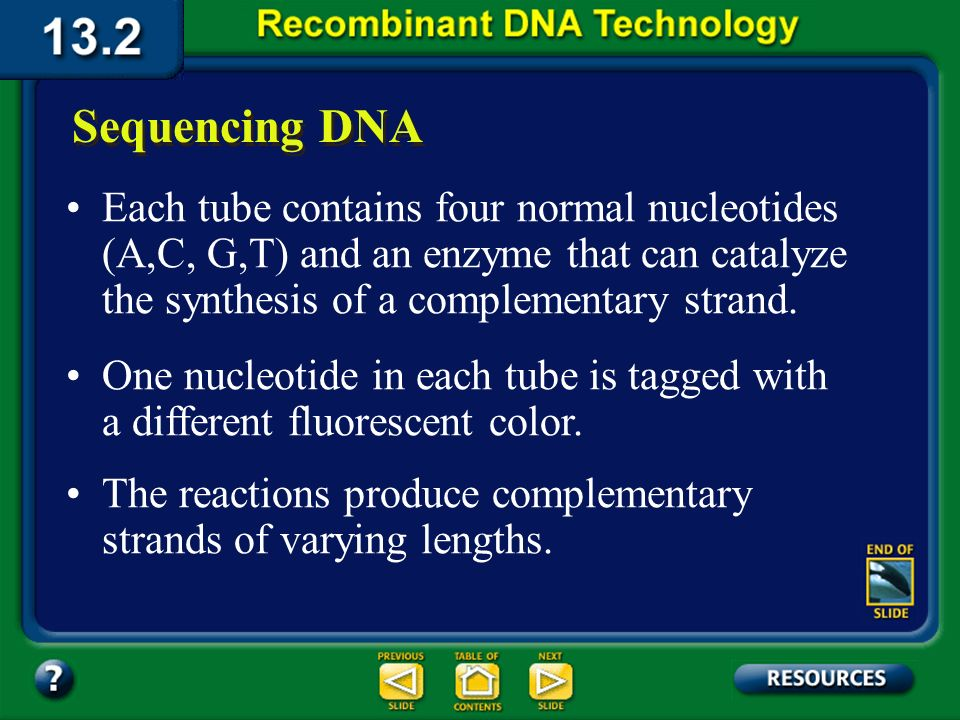Section 13.2 Summary – pages 341 - 348 Sequencing DNA In DNA sequencing, millions of copies of a double-stranded DNA fragment are cloned using PCR. Th