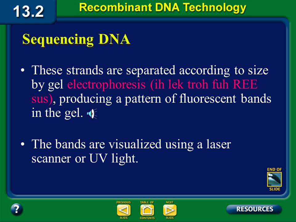 Section 13.2 Summary – pages 341 - 348 Sequencing DNA One nucleotide in each tube is tagged with a different fluorescent color. Each tube contains fou