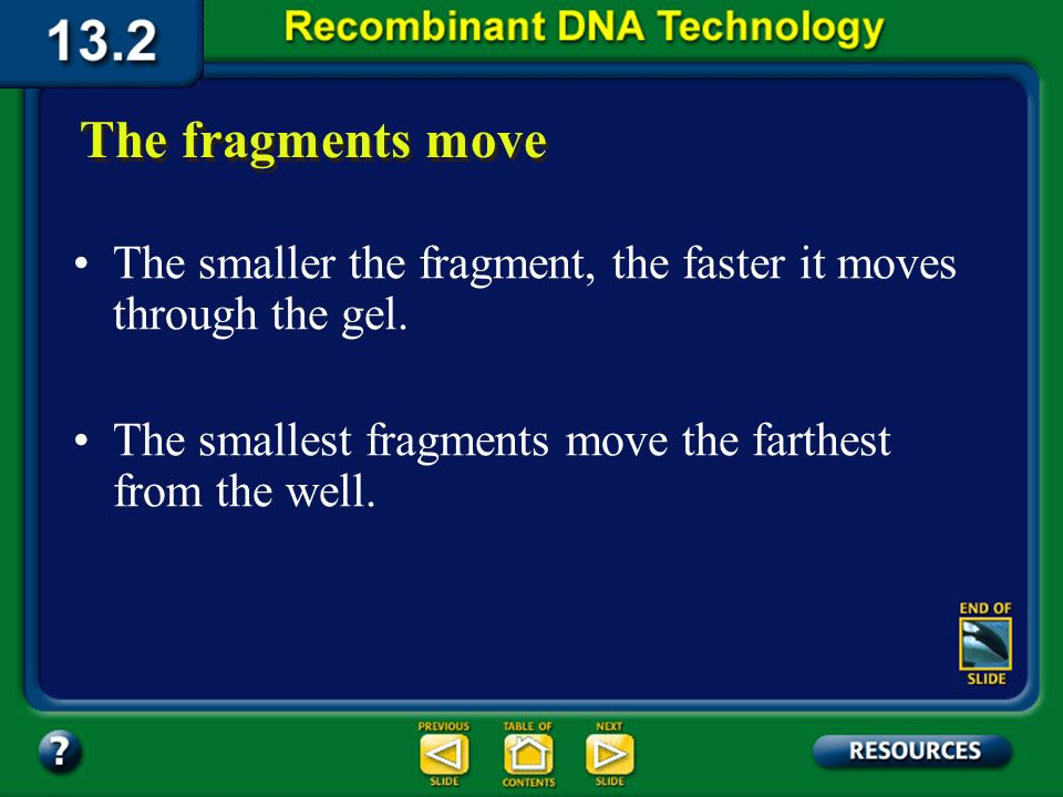 Section 13.2 Summary – pages 341 - 348 The fragments move The negatively charged DNA fragments travel toward the positive end. Completed gel Shorter f