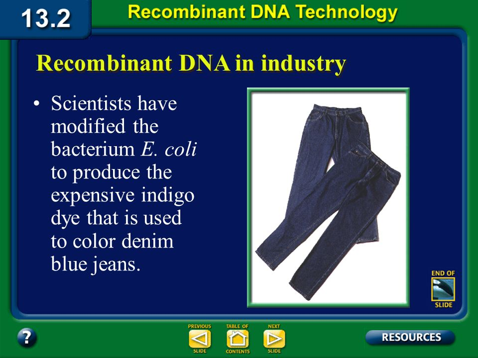 Section 13.2 Summary – pages 341 - 348 Applications of DNA Technology Many species of bacteria have been engineered to produce chemical compounds used