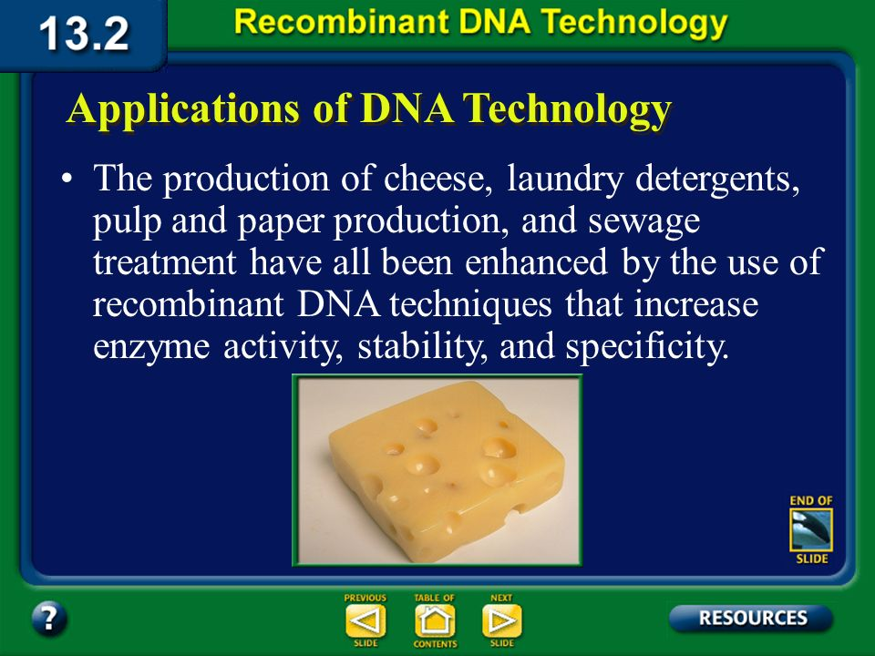 Section 13.2 Summary – pages 341 - 348 Recombinant DNA in industry Scientists have modified the bacterium E. coli to produce the expensive indigo dye