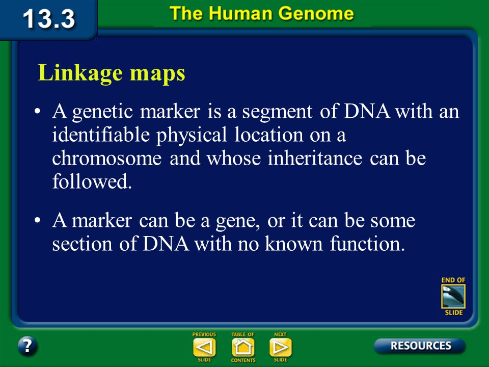 Section 13.3 Summary – pages 349 - 353 Because humans have only a few offspring compared with the larger numbers of offspring in some other species, a