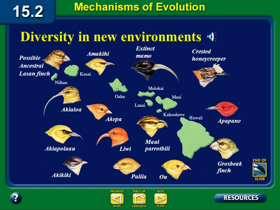 Section 15.2 Summary– pages 404-413 Adaptive radiation in both plants and animals has occurred and continues to occur throughout the world and is common on islands.