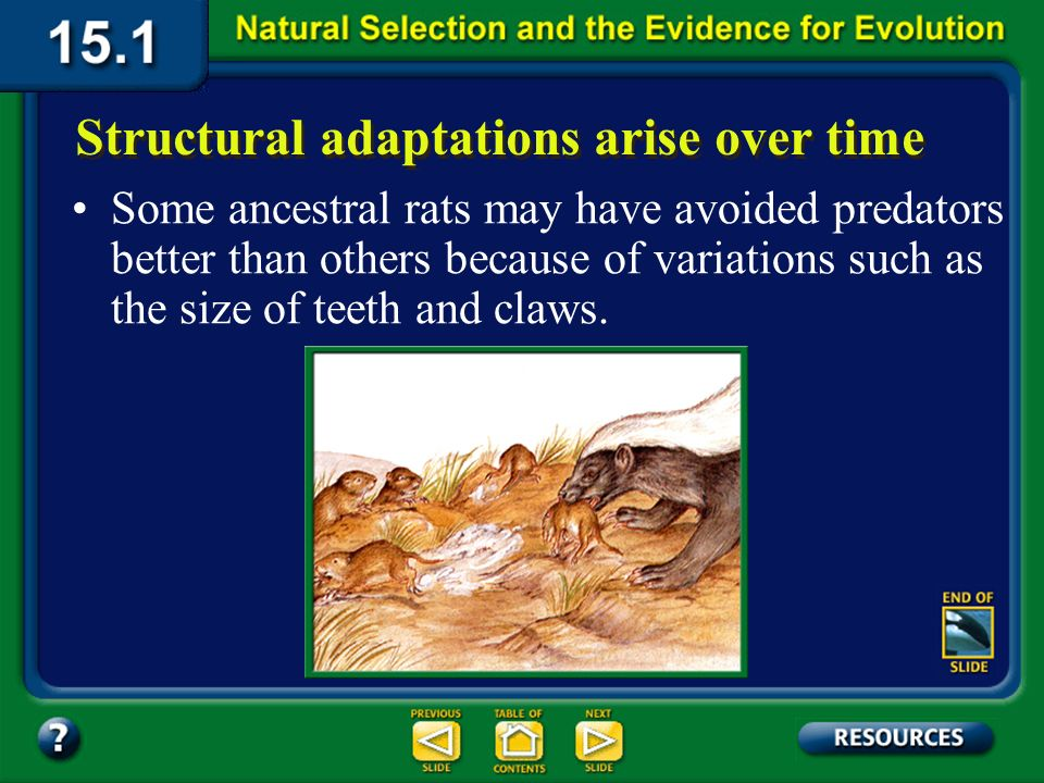 Section 15.1 Summary – pages 393-403 Structural adaptations arise over time The ancestors of todays common mole-rats probably resembled African rock rats.