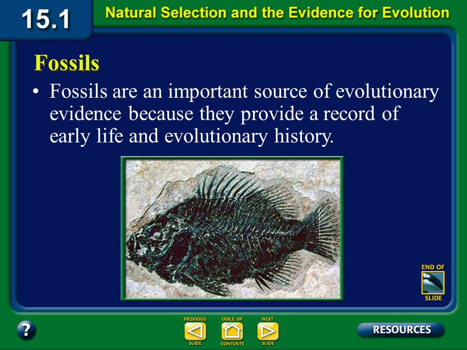 Section 15.1 Summary – pages 393-403 Other Evidence for Evolution Physiological resistance in species of bacteria, insects, and plants is direct evidence of evolution.