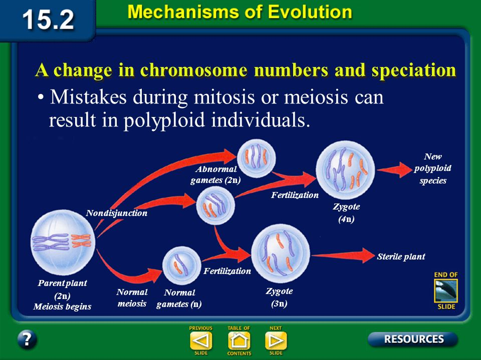 Section 15.2 Summary– pages 404-413 A change in chromosome numbers and speciation Chromosomes can also play a role in speciation.