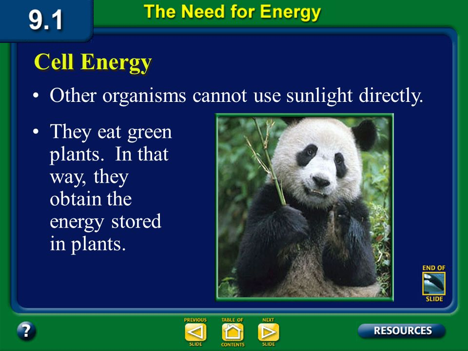 Section 9.1 Summary – pages 221-224 All living organisms must be able to obtain energy from the environment in which they live. Plants and other green