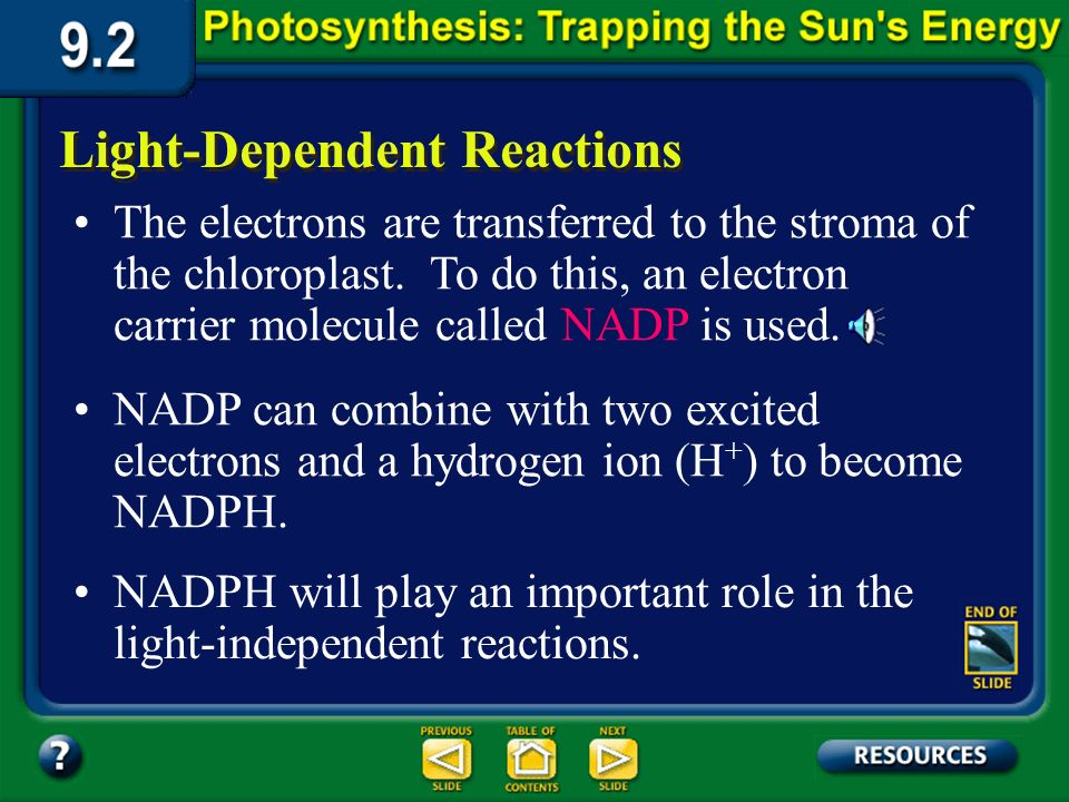 Section 9.2 Summary – pages 225-230 This lost energy can be used to form ATP from ADP, or to pump hydrogen ions into the center of the thylakoid disc.