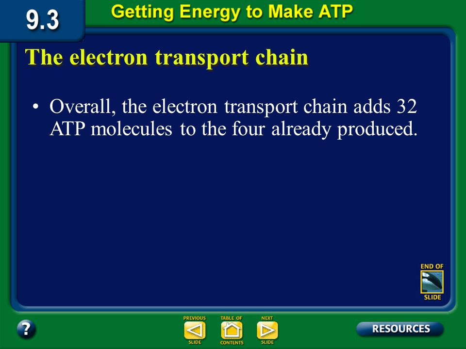 Section 9.3 Summary – pages 231-237 The electron transport chain In the electron transport chain, the carrier molecules NADH and FADH 2 gives up elect