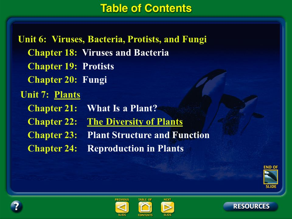 Section 22.3 Summary – pages 588 - 597 Dicot species include nearly all of the familiar shrubs and trees (except conifers), cacti, wildflowers, garden flowers, vegetables, and herbs.