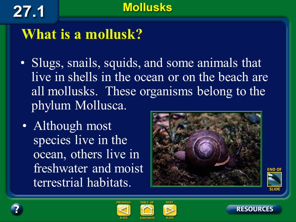 Section 27.1 Summary – pages 721-727 Slugs, snails, squids, and some animals that live in shells in the ocean or on the beach are all mollusks.