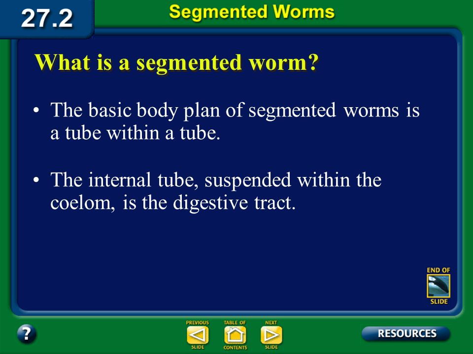 Section 27.2 Summary – pages 728-733 Segmented worms are classified in the phylum Annelida. They include leeches and bristleworms as well as earthworm