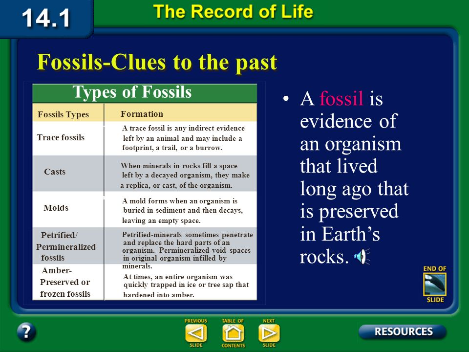 Section 14.1 Summary – pages 369-379 About 95 percent of the species that have existed are extinctthey no longer live on Earth. Fossils-Clues to the p