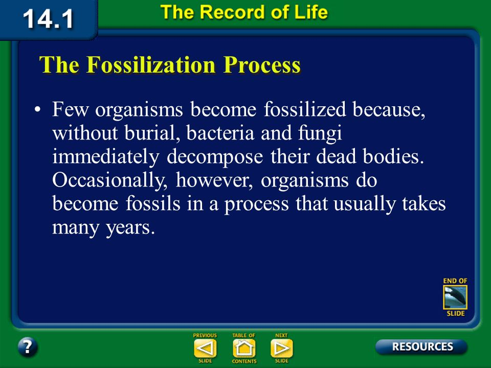 Section 14.1 Summary – pages 369-379 Fossils are not usually found in other types of rock because of the ways those rocks form. For example, the condi