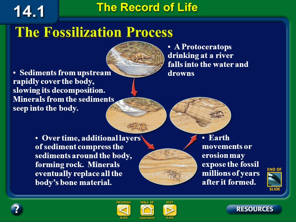 Section 14.1 Summary – pages 369-379 Few organisms become fossilized because, without burial, bacteria and fungi immediately decompose their dead bodi