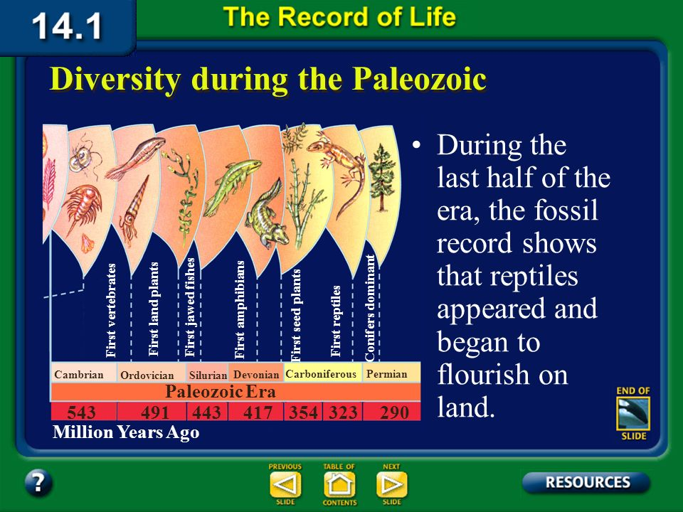 Section 14.1 Summary – pages 369-379 During the first half of the Paleozoic, fishes, the oldest animals with backbones, appeared in Earths waters. Div