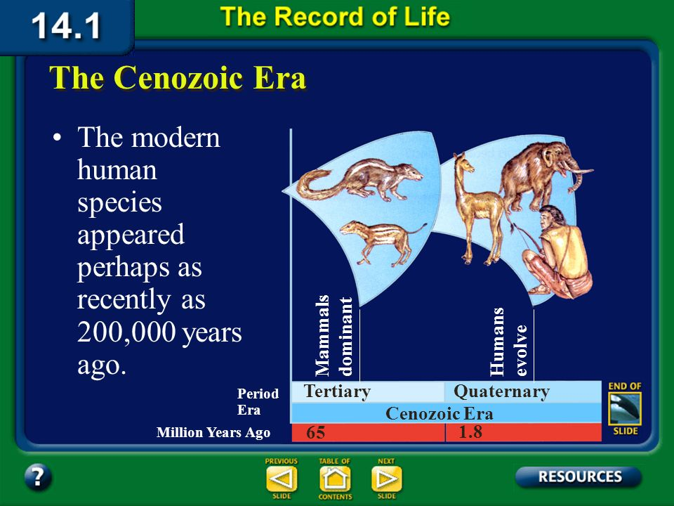 Section 14.1 Summary – pages 369-379 The Cenozoic Era The Cenozoic began about 65 million years ago. It is the era in which you now live. Mammals bega