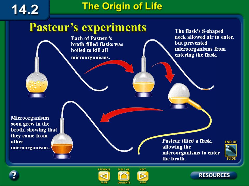 Section 14.2 Summary – pages 380-385 Pasteurs experiments In the mid-1800s, Louis Pasteur designed an experiment that disproved the spontaneous genera