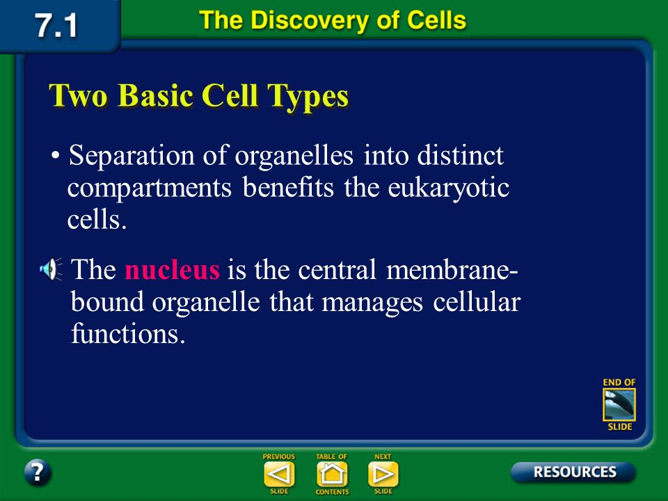 Section 7.1 Summary – pages 171-174 The membrane-bound structures within eukaryotic cells are called organelles. Each organelle has a specific functio