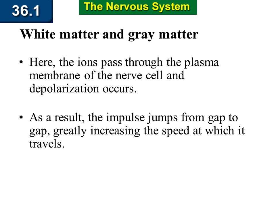 Section 36.1 Summary – pages 943 - 950 The myelin sheath insulates the axon, hindering the movement of ions across its plasma membrane. White matter a