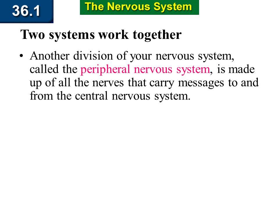 Section 36.1 Summary – pages 943 - 950 The Central Nervous System Cerebrum Skull Medulla oblongata Cerebellum Spinal cord Vertebra