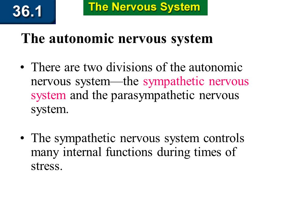 Section 36.1 Summary – pages 943 - 950 The autonomic nervous system The autonomic nervous system carries impulses from the CNS to internal organs. The