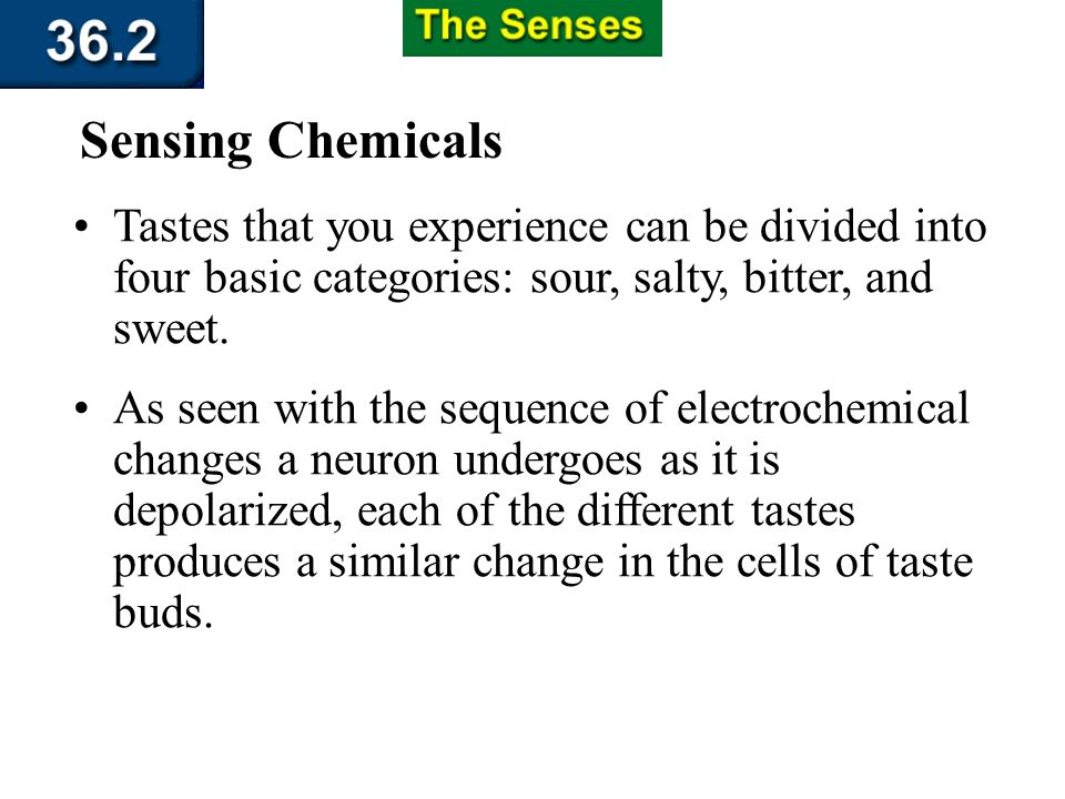 Section 36.2 Summary – pages 951 - 955 Sensing Chemicals Olfactory nerve Olfactory bulb Olfactory nerve receptors Taste bud Sensory neuron Smell Molec