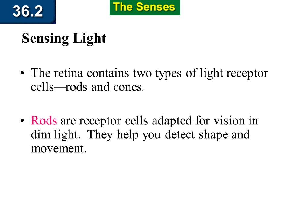 Section 36.2 Summary – pages 951 - 955 Sensing Light Sclera Choroid Retina Optic nerve Iris Lens Light Pupil Cornea