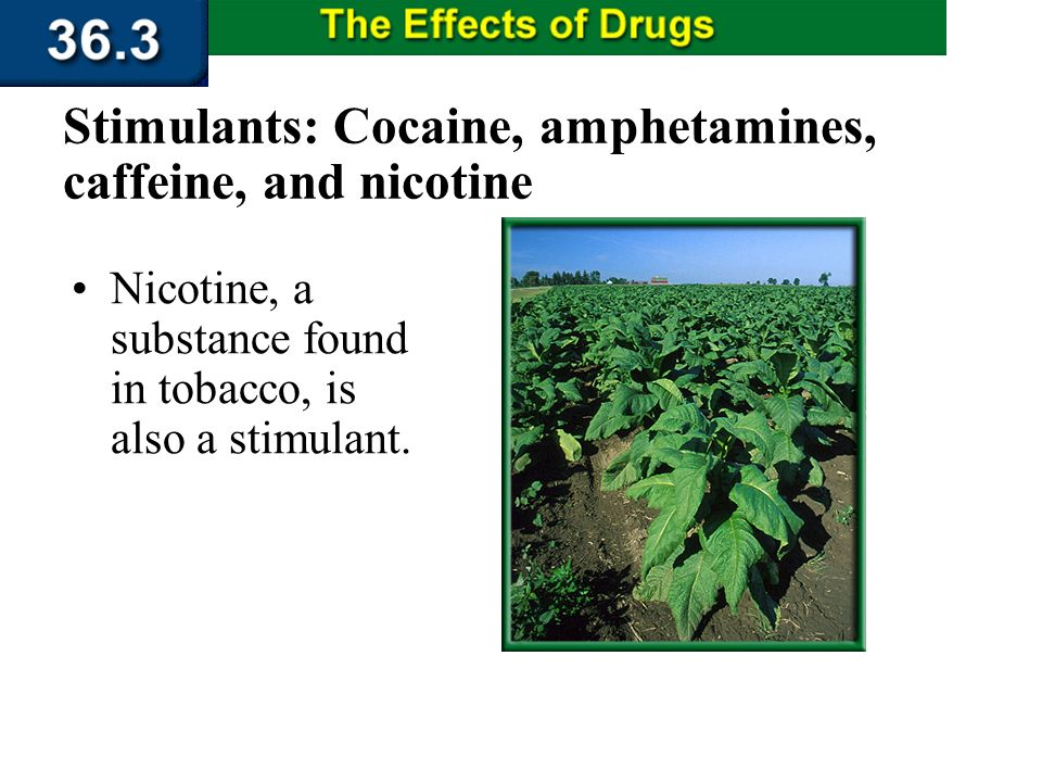 Section 36.3 Summary – pages 956 - 963 Caffeine also causes an increase in heart rate and urine production, which can lead to dehydration. Stimulants: