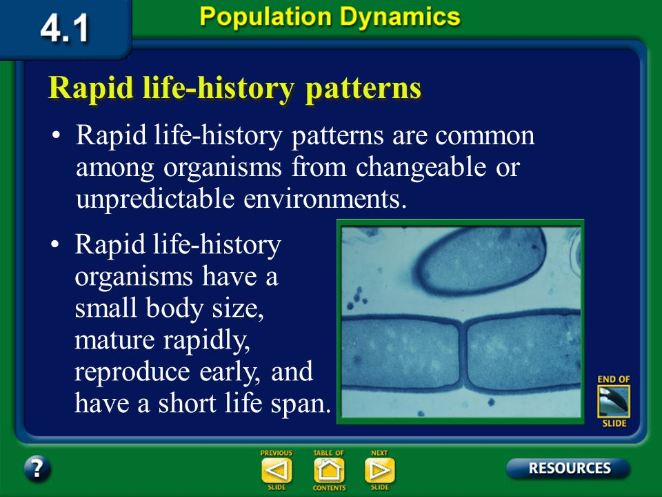 Section 4.1 Summary – pages 91-99 Biologists study the factor that determines population growthan organisms reproductive pattern, also called its life
