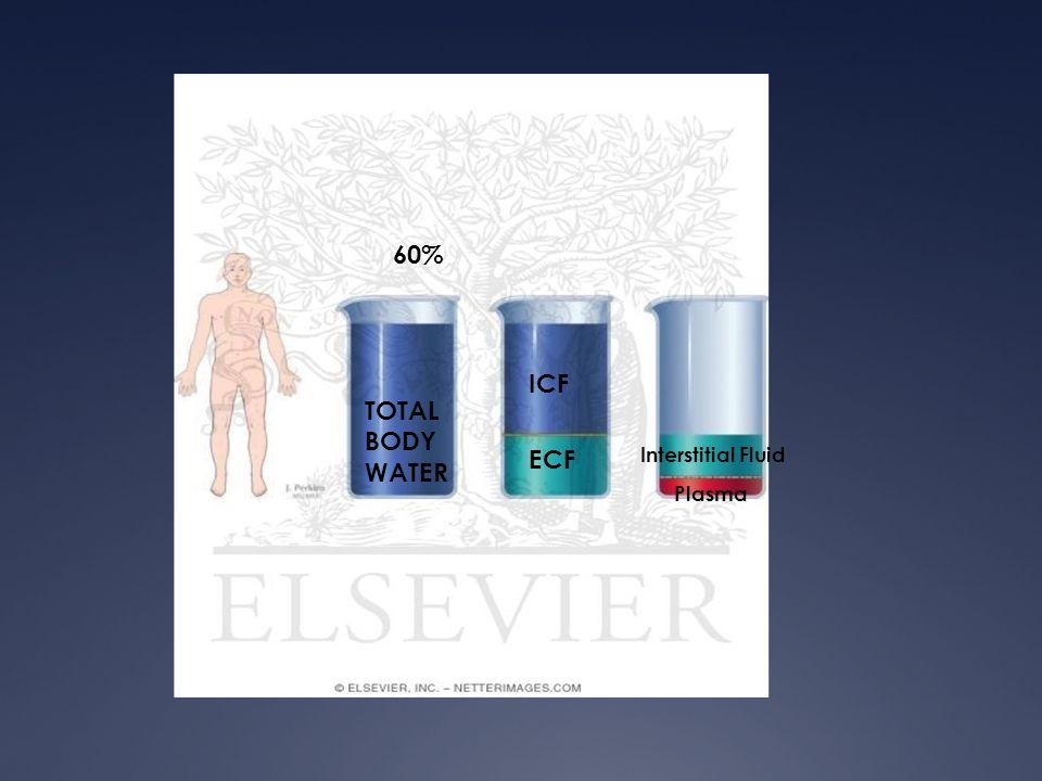 60% ICF ECF TOTAL BODY WATER Interstitial Fluid Plasma