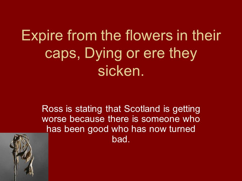 Expire from the flowers in their caps, Dying or ere they sicken. Ross is stating that Scotland is getting worse because there is someone who has been