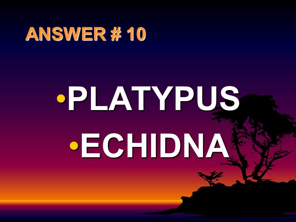 ANSWER # 10 PLATYPUSPLATYPUS ECHIDNAECHIDNA