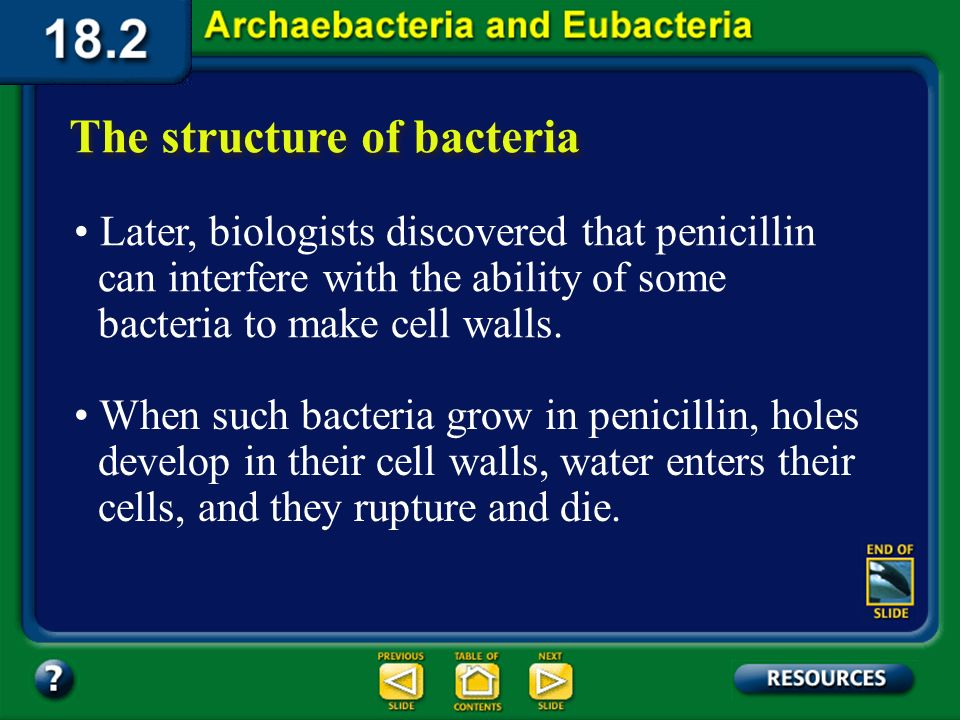 Section 18.2 Summary – pages 484-495 The structure of bacteria In 1928, Sir Alexander Fleming accidentally discovered penicillin, the first antibiotic