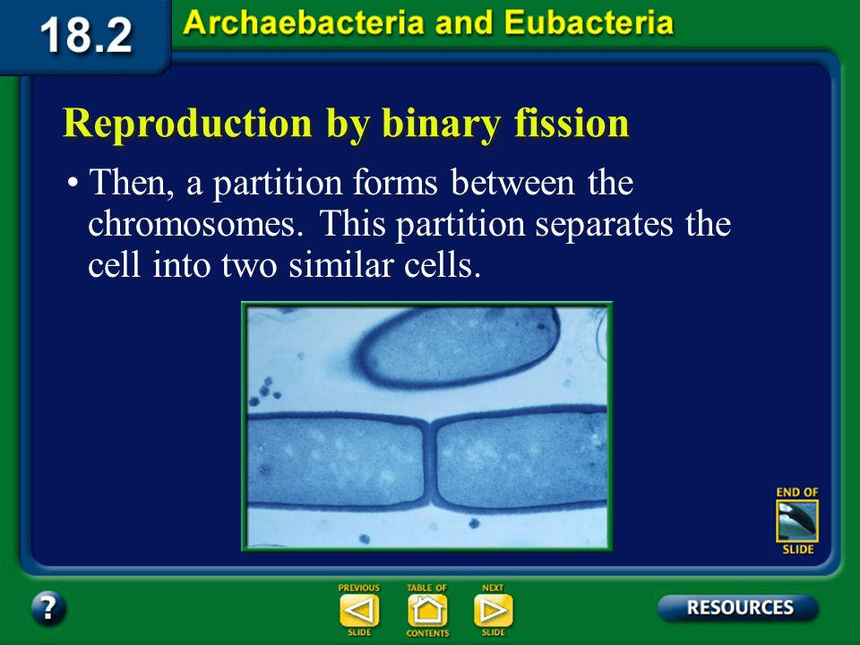 Section 18.2 Summary – pages 484-495 Reproduction by binary fission The cell grows larger, and eventually the two chromosomes separate and move to opp