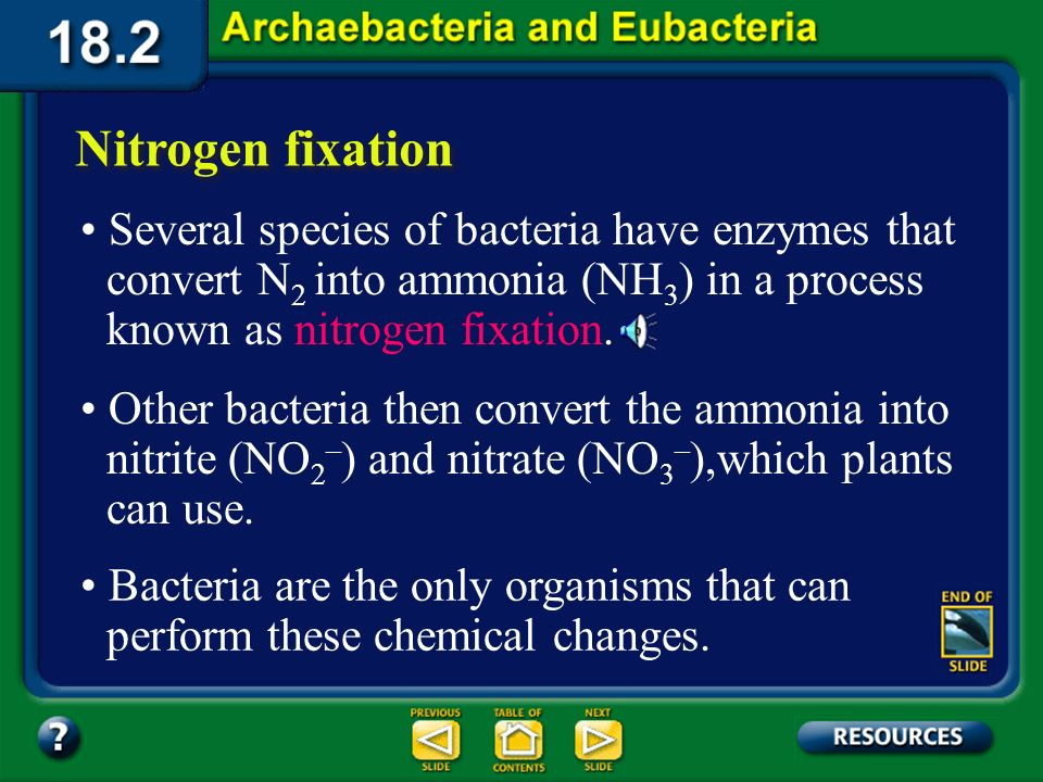 Section 18.2 Summary – pages 484-495 Nitrogen fixation Yet few organisms, including most plants, can directly use nitrogen from the air. All organisms
