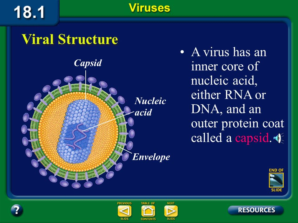 Section 18.1 Summary – pages 475-483 HIV: An infection of white blood cells Most people with an HIV infection eventually get AIDS because, over time, more white blood cells are infected and produce new viruses.