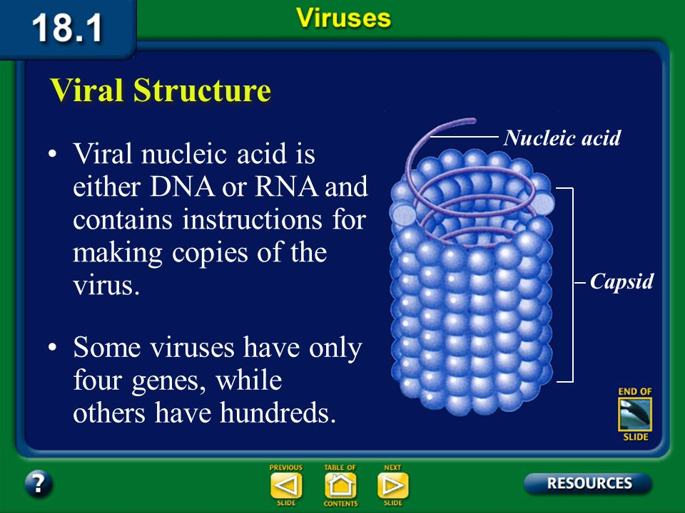 Section 18.1 Summary – pages 475-483 Viral nucleic acid is either DNA or RNA and contains instructions for making copies of the virus.