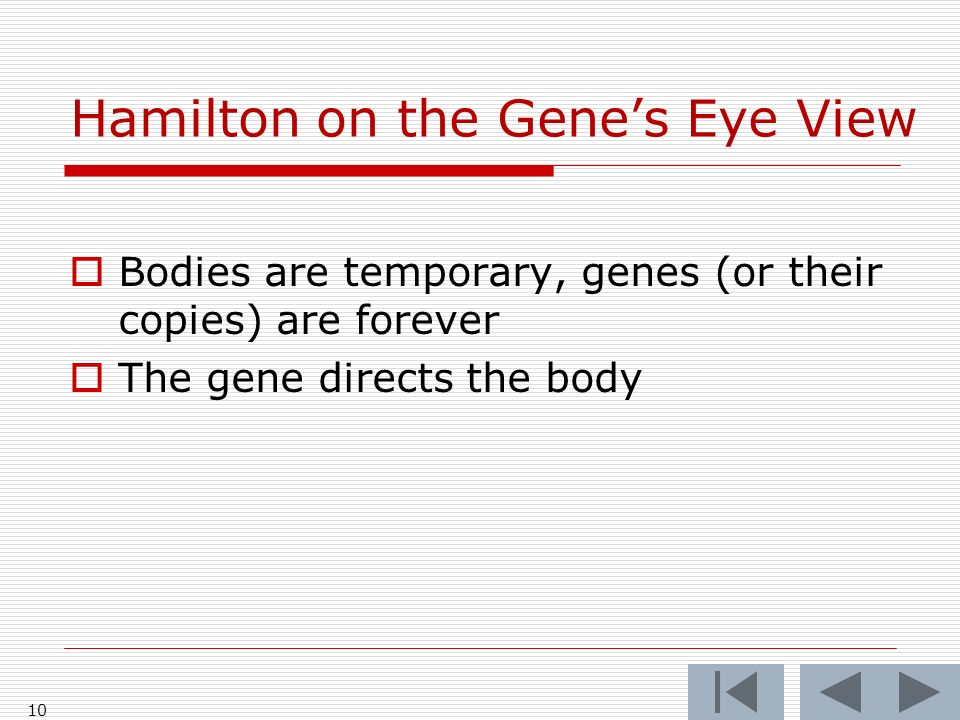 Hamilton on the Genes Eye View Bodies are temporary, genes (or their copies) are forever The gene directs the body 10