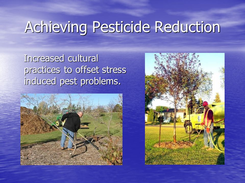 Achieving Pesticide Reduction Increased cultural practices to offset stress induced pest problems.