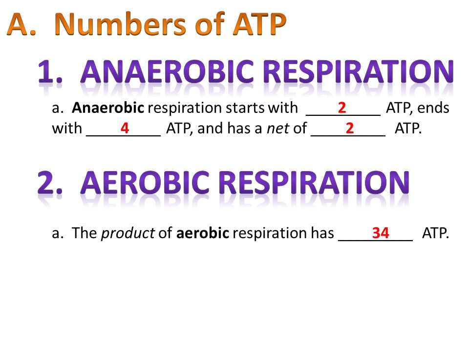 a. Anaerobic respiration starts with _________ ATP, ends with _________ ATP, and has a net of _________ ATP. a. The product of aerobic respiration has